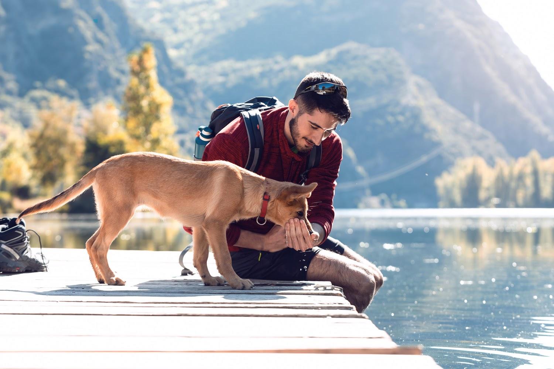 """¿Dónde ir de escapada con mi perro? Estos 4 planes """"pet friendly"""" te sorprenderán"""