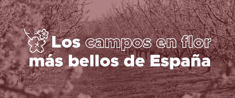 Un nuevo fenómeno de viaje: los mejores lugares para ver los campos en flor en España