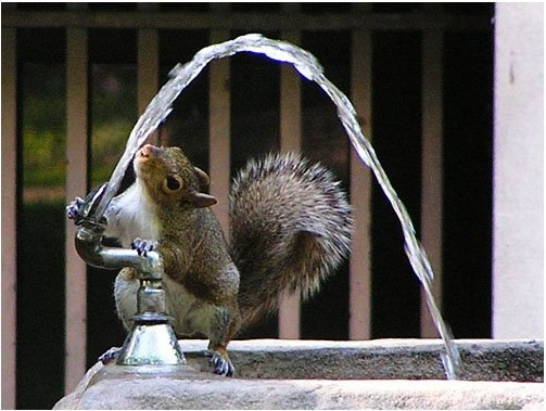 squirrel_fountain_t620