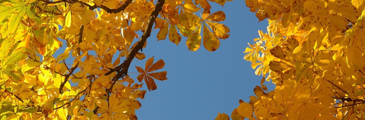 Este otoño, ¡que no se te caiga el pelo!