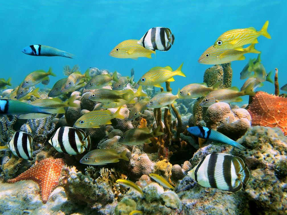 buceo y peces tropicales