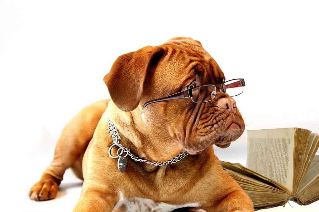 perro-estudioso
