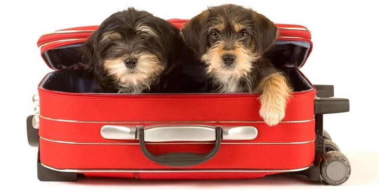 ¿Qué opciones tengo para viajar con mi mascota?
