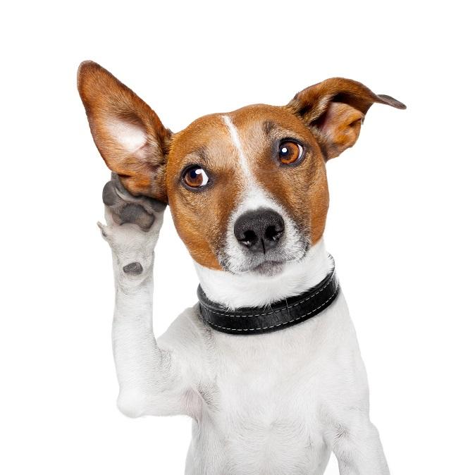 perrito escuchando opiniones