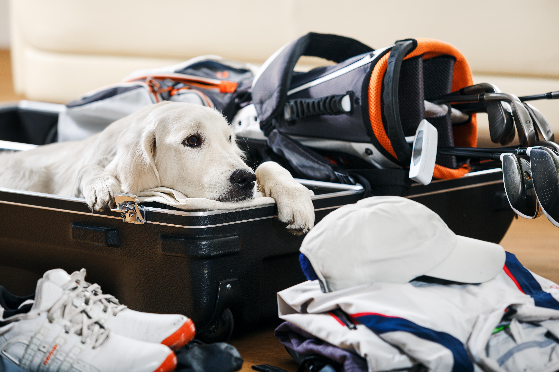 vacaciones-con-mascotas