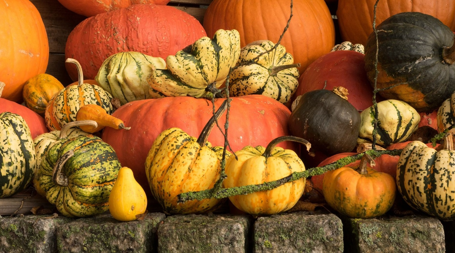 Celebra el Halloween en España